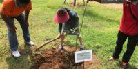 植樹 プロジェクト 2018
